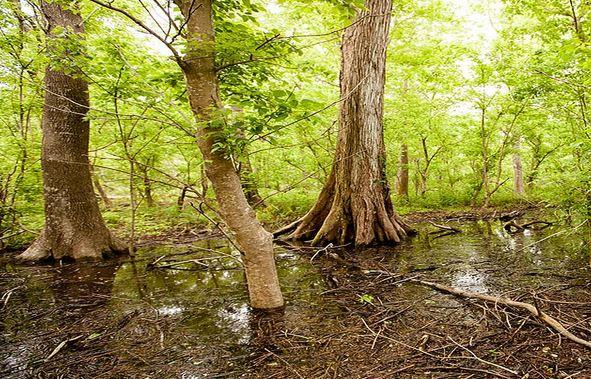 woodlands-conservancy