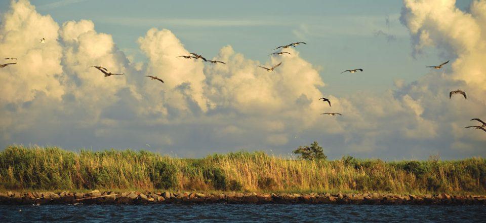 Coastal-Issues
